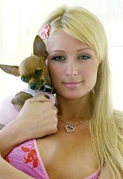 paris hilton chihuahua t shirt Paris Hiltons Chihuahua Skeet Shoot Pull T Shirt from Rizzo Tees