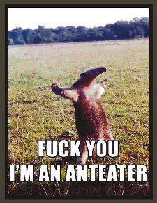 fuck you im an anteater t shirt Fuck You Im An Anteater T Shirt from Red Bubble