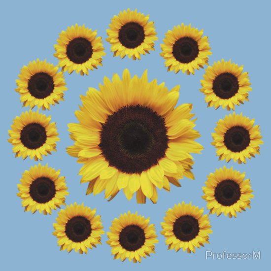 13 sunflowers t shirt 13 Sunflowers T Shirt