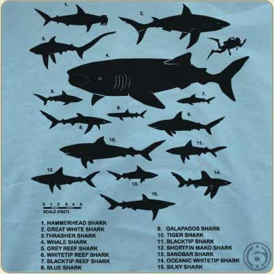 shark-chart-t-shirt